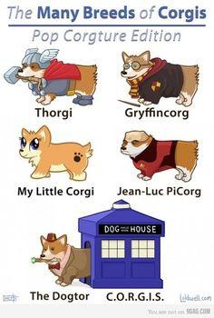Fantasy Corgis (potter,thor,st:tng,dr who,corgis,cartoon)