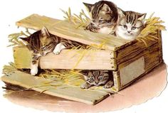 Oblaten Glanzbild scrap die cut chromo Katze cat kitten Kiste box Helena Maguire
