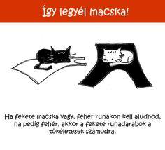286 Így legyél macska!   Tippek és ötletek kezdő cicusoknak Fun, Hilarious