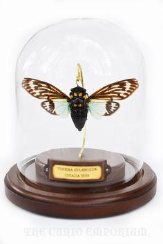 Tosena Splendida Cicada Bug Dome SKU.ENDI01. $52,50, via Etsy.