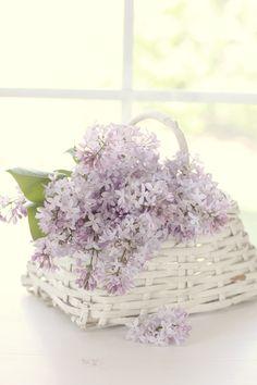 lovely lilacs ✫✫ ❤️ *•. ❁.•*❥●♆● ❁ ڿڰۣ❁ ஜℓvஜ♡❃∘✤ ॐ♥⭐▾๑ ♡༺✿ ♡·✳︎·❀‿ ❀♥❃ ~*~ WED 6th APR 2016!!! ✨ ✤ॐ ❦♥⭐♢∘❃♦♡❊ ~*~ Have a Nice Day ❊ღ༺ ✿♡♥♫~*~ La-la-la Bonne vie ♪ ♥❁●♆●✫✫