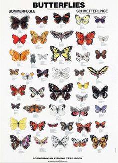 Kunstplakat av sommerfugler   Plukkselv.no - nettbutikk for hage- og sankeentusiasten Butterfly Illustration, Butterfly Drawing, Butterfly Painting, Butterfly Crafts, Vintage Butterfly, Blue Butterfly, Butterfly Wings, Butterfly Artwork, Monarch Butterfly