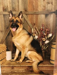 My first GSD Kiri.  One of the greatest dogs I've ever owned!