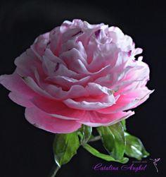 Freeformed Sugar  Pink Peony- garden beauty by Catalina Anghel azúcar'arte