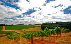With more than 200 wineries in the Willamette Valley, many parents are surely going to enjoy visiting their Linfield Wildcat.
