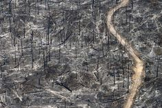 Within the next 10 minutes, about 200 football fields worth of trees, plants, and wildlife in the Amazon will be destroyed. We have lost more than 20% of the Amazon to deforestation in the past 40 years alone, and scientists predict that we will lose another 20% within the span of the next two decades.