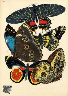 Seguy - Papillons (2)
