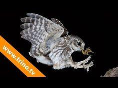 ▶ Fotografía de alta velocidad 2º. Curso fotografía de aves #10 - YouTube