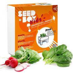 Huerto urbano: rabanito rojo y espinaca - Seedbox Kids