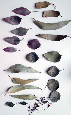 Visual of eucalyptus leaves, that dye red Colour Schemes, Color Patterns, Eucalyptus Leaves, No Rain, Wabi Sabi, Color Inspiration, Planting Flowers, Texture, Beautiful