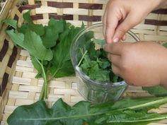 Weed recipe: how to make a wild green vinegar with foraged edible weeds