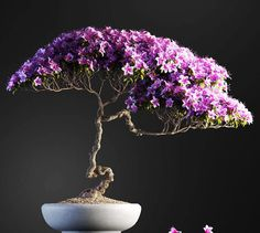 20 highly detailed models of bonsai plants for interior visualization. Available in next formats: Max, OBJ, FBX. Bonsai Plants, Bonsai Garden, Bonsai Azalea, Bonsai Tree Care, Bonsai Trees, Plantas Bonsai, Miniature Trees, 3d Studio, Growing Tree