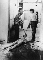 Dachau inmates drag an emaciated corpse to the ovens