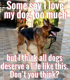 My girls have no clue of how pampered they are! Funny Animal Memes, Animal Quotes, Funny Dogs, I Love Dogs, Puppy Love, Cute Dogs, German Shepherd Memes, German Shepherds, Chihuahua Quotes