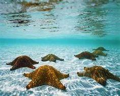 Sea Creatures - Bing Images