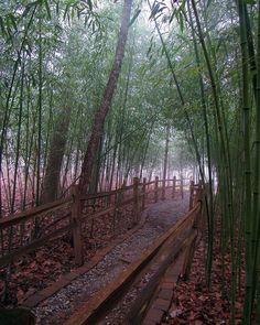 "Sam Calhoun on Instagram: ""Wonderful fog in the bamboo forest at Monte Sano State Park's North Alabama Japanese Garden.  #montesanostatepark #visitnorthal #explore…"""