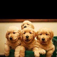 sweet babies!!