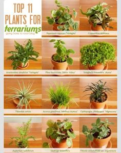 Eleven Top Plants For Terrariums #Home #Garden #Trusper #Tip