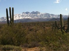 Desert Snow - Great picture taken by Mayor Jay Schlum of snow on Four Peaks as you look through the Saguaro