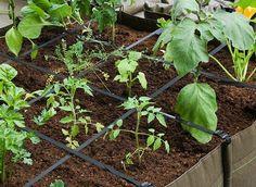 Un jardin potager au balcon