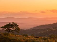Rhinoceros, South Africa Photograph by Brent Stirton, National Geographic A rhinoceros stands on a hillside in KwaZulu-Natal Province. Landscape Art, Landscape Photography, Kwazulu Natal, Destinations, Out Of Africa, National Geographic Photos, Dream Vacations, Beautiful World, Beautiful Scenery
