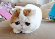 Émile Zola  [p.s. scusatemi. il gatto depresso lo volevo troppo. solo Zola e Balzac e Zorba sono di razza, infatti sono depressi o sadici o disadattati (in generale si tratta di regali o di gatti di vecchi colleghi che non li volevano più)]