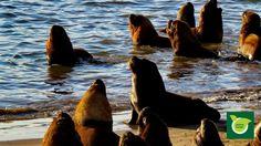 Charla de Lobos Marinos en el puerto...