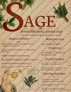 Book of Shadows Pages, Herb Grimoire, Digital Download, Grimoire Pages, Plant Pages, Instant Download, Sage, Mugwort, Basil, Green Witch