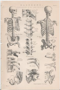 Set of 4 Vintage Anatomy Plates: The Back Bone por WorldofRareBooks