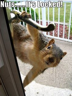 Hahahha this could be a squirrel in Chester--> animal pictures with funny captions Animals And Pets, Baby Animals, Funny Animals, Cute Animals, Small Animals, Nature Animals, Wild Animals, Beautiful Creatures, Animals Beautiful