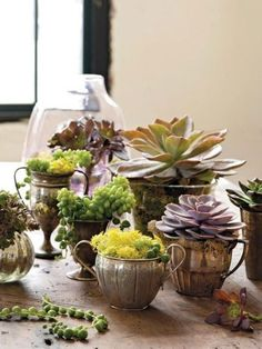 11 Ways to Use & Display Vintage Metals: succulents in vintage silver containers