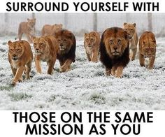Surround Yourself With Those On The Same Mission As You life quotes quotes quote life motivational quotes inspirational quotes about life life quotes and sayings life inspiring quotes life image quotes best life quotes quotes about life lessons Lion Quotes, Me Quotes, Motivational Quotes, Inspirational Quotes, Qoutes, Motivational Speakers, Quotations, Crab Mentality Quotes, Lion Memes
