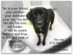 """NERO ~  is a lover boy! Look at his tail go  He is so friendly and sweet, not to mention adorable. He is listed as a 4 yo male chow mix (looks more lab to me). This sweet boy was confiscated with 4 other dogs,""""They suffered from neglect and lived in horrible conditions. Now it is time for them to be adopted, go to a rescue, or go to a foster home. Don't let them be another statistic."""" Nero did test HW+ Confiscate/Cruelty  Weight Estimate: approx. 42 lbs  Due Out: 10/19"""