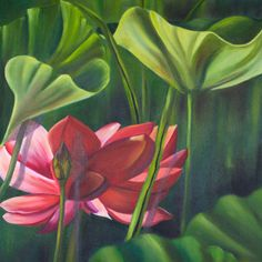 "Water Lillies by Shelley Bauer Oil ~ 24"" x 24"""