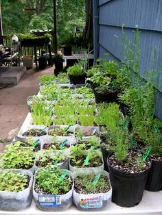 Sowing A Winter Garden Great Ideas For Using The Outdoors To Start Off Your Seedlings Pinterest And Gardens