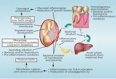 Dimensions of Dental Hygiene- pregnancy & dental health