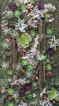 Beautiful vertical garden wall of succulents. Succulent Gardening, Cacti And Succulents, Planting Succulents, Planting Flowers, Vertical Succulent Gardens, Indoor Vertical Gardens, Indoor Gardening, Flowers Garden, Organic Gardening