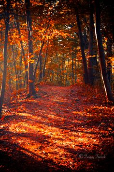 lovely to walk in the woods, crunching leaves underfoot. what a gorgeous photo. makes me homesick for autumn already (can we vote that autumn last from September until March please? Beautiful World, Beautiful Places, Beautiful Pictures, New England Fall, Autumn Scenes, All Nature, Fall Pictures, Forest Pictures, Belle Photo