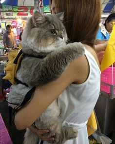 I didn\'t know you could get backpacks for cats! There\'s no way I\'d be able to get one on Bonnie.