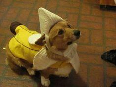 banana!!!