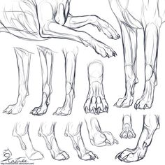 Anatomy reference · animal anatomy · study: canine forepaws by katinka drawing techniques, drawing lessons, drawing tips, art Animal Sketches, Animal Drawings, Drawing Sketches, Art Drawings, Drawing Tips, Drawing Lessons, Deviantart, Poses Manga, Dog Anatomy