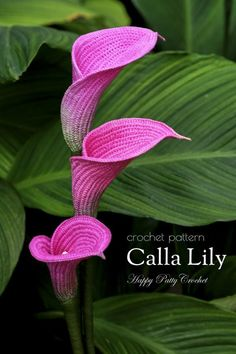 Crochet Pattern for a Calla Lily Crochet Flower Pattern for an Arum Lily Flower beauty flowers Crochet Flower Tutorial, Crochet Flower Patterns, Crochet Doilies, Crochet Flowers, Crochet Leaves, Crochet Motif, Pattern Flower, Flower Applique, Lys Calla