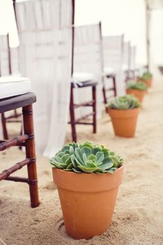 Potted succulents are a great way to line your aisle.