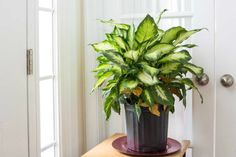 5 Indoor Plants That Don't Die Easily