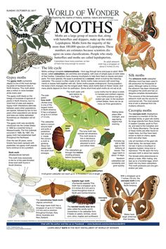 Butterfly Pictures, Butterfly Art, Types Of Moths, Moth Drawing, World History Facts, Todays Comics, Science Topics, All About Animals, Animal Facts