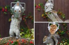 squirrels and other rodents will be upgraded! cybermen squirrel feeder and photos by Emma Young of Hampshire. (via io9 and the mirror)