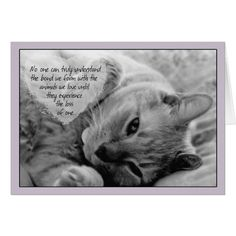 Loss of Pet Cat Sympathy Card Cuddly Cat on Pillow If you love cats as much as we do, check out our animal canvas wrap range, click that link! Pet Quotes Cat, Pet Loss Quotes, Animal Quotes, I Love Cats, Crazy Cats, Cute Cats, Pet Loss Grief, Pet Sympathy Cards, Greeting Cards