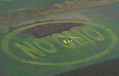 Lawsuit against government sponsored planting of Monsanto's GMOs in wildlife refuges