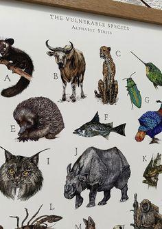 Textile Prints, Art Prints, Vulnerable Species, Kids Room Art, Eye For Detail, Woodland Nursery, Natural History, Nursery Art, Vulnerability