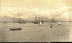 Vancouver Harbour, Monday 1 July 1889 Past Tense, Iconic Photos, Back In The Day, British Columbia, Photo Cards, West Coast, Sea Shells, Vancouver, Sailing